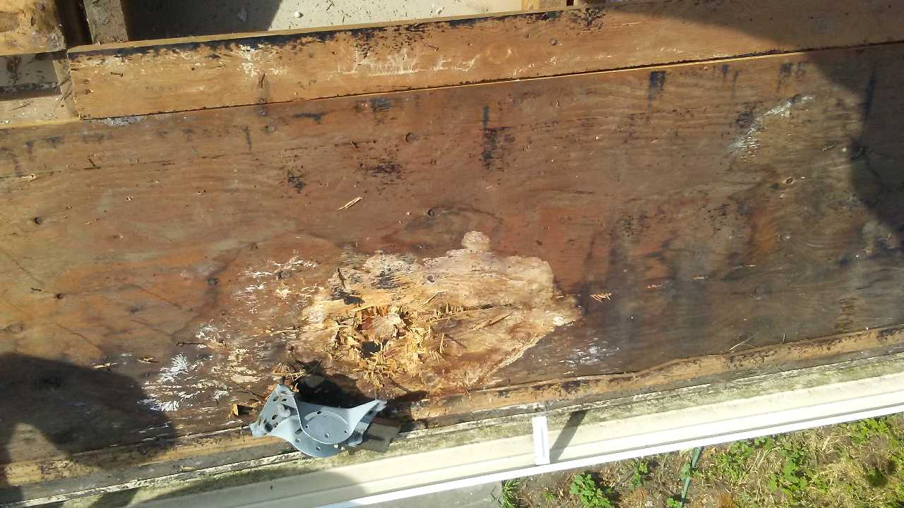 Roof with wood rot before repairs