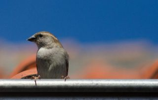 how to keep birds out of your gutters